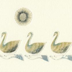 Swan Lake1m