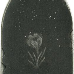 始まりの花
